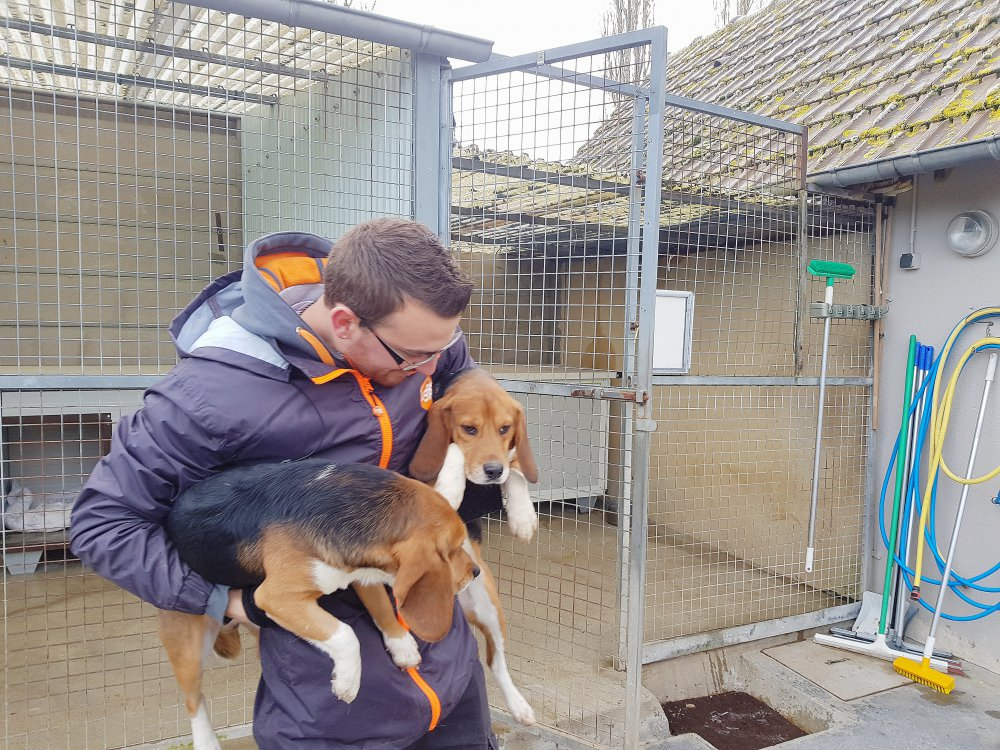 Caen Des Chiens Issus De Laboratoires A Adopter Dans Le Calvados