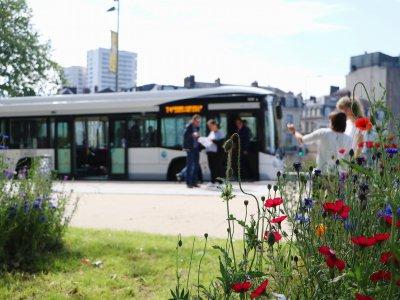 Boulevard des Belges, dernier arrêt de la T4 avant de passer rive gauche.    Pierre Durand-Gratian