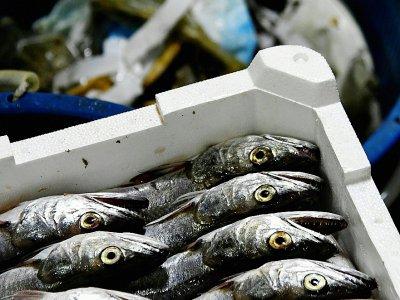 Une caisse de poissons à bord d'un bateau italien, le 23 mai 2019, au large de San Benedetto del Tronto    Filippo MONTEFORTE [AFP]