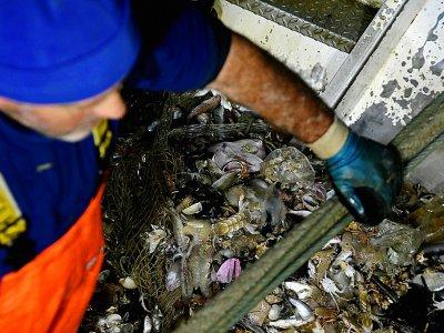 Des pêcheurs italiens remontent des poissons et des déchets en plastique dans leurs filets, le 23 mai 2019 au large de San Benedetto del Tronto, en Italie    Filippo MONTEFORTE [AFP]