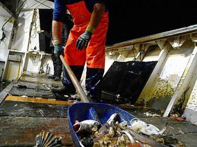 Un pêcheur récolte des déchets en plastique pris dans les filets, le 23 mai 2019 au large de San Benedetto del Tronto, en Italie    Filippo MONTEFORTE [AFP]