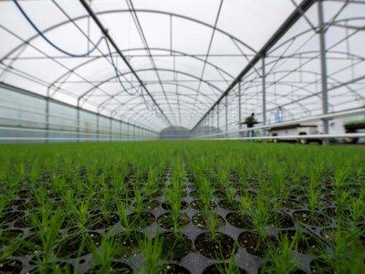 Des plants dans une serre en Islande destinés à être replantés, le 20 mai 2019    Halldor KOLBEINS [AFP]