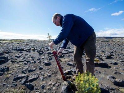 """Hreinn Oskarsson, armé d'un """"potti-putki"""", met en terre des pins et des épicéas dans un champ de lave en Islande, le 21 mai 2019    Halldor KOLBEINS [AFP]"""
