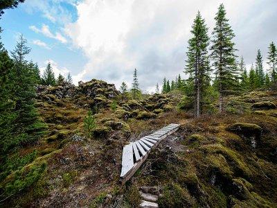 La forêt de Heidmork près Reykjavik, le 21 mai 2019    Halldor KOLBEINS [AFP]