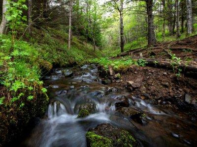 Une rivière dans la forêt de Mogilsa près de Reykjavik, le 21 mai 2019    Halldor KOLBEINS [AFP]
