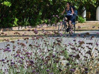Le parc Blandan à Lyon le 24 juillet 2019    PHILIPPE DESMAZES [AFP/Archives]
