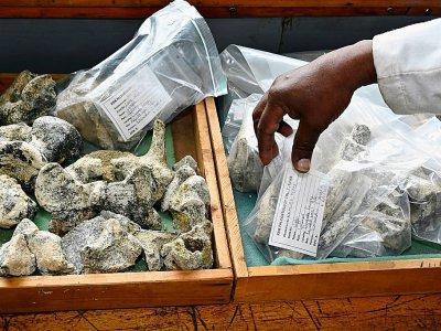 Des fossiles prêts à être entreposés au musée national de Nairobi, le 23 mai 2019 au Kenya    SIMON MAINA [AFP]