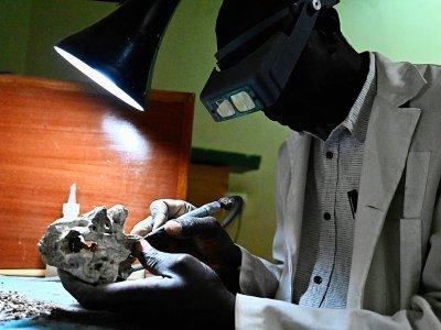 Un employé du musée national de Nairobi nettoie un fossile, le 23 mai 2019 au Kenya    SIMON MAINA [AFP]