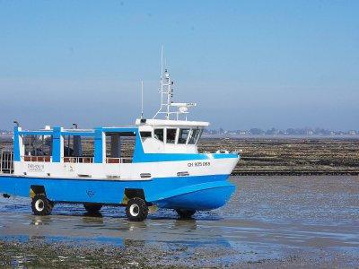 Le bateau amphibie permet aux touristes de rejoindre Tatihou... mais attention, quand il est complet il faut marcher, si la marée le permet ! - Tendance Ouest