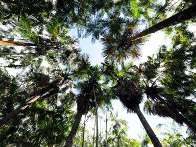 Forêt d'Acai au Brésil    EVARISTO SA [AFP/Archives]