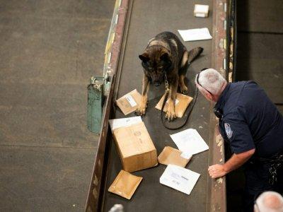 Un  agent de la douane américaine, aidé par un berger allemand, cherche de la drogue dans des paquets arrivés au centre de tri postal de l'aéroport John F. Kennedy, le 24 juin 2019 à New York    Johannes EISELE [AFP]
