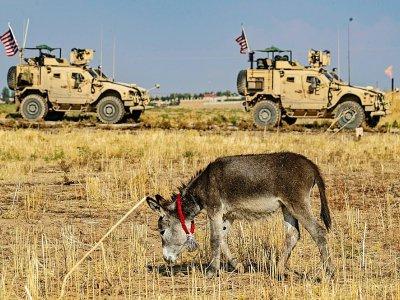 Un convoi américain passe devant un âne dans le nord-est de la Syrie près d'al-Qahtanyiah, le 31 octobre 2019 - Delil SOULEIMAN [AFP]