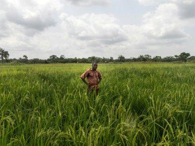 Un agriculteur dans une rizière à Ouinhi (Bénin) le 21 novembre 2016 - Yanick FOLLY [AFP/Archives]