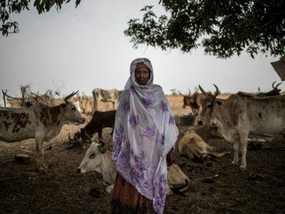 Dans le camp de  Banguetaba, près de Sévaré, dans le centre du Mali, où des bergers peuls se sont réfugiés avec leurs troupeaux pour fuir les violences. Le 8 juillet 2019    Marco LONGARI [AFP]