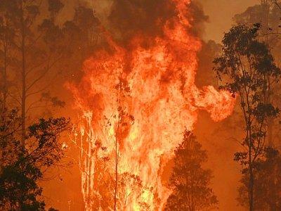 Un feu de brousse à Bobin, à 350 km au nord de Sydney, le 9 novembre 2019, l'un de la centaine qui ravagent actuellement la côte est de l'Australie - PETER PARKS [AFP]