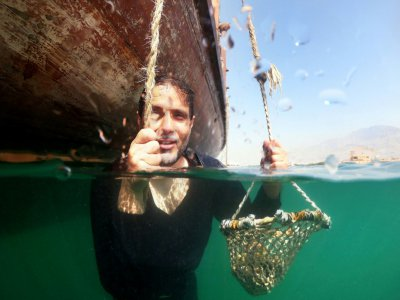 Abdallah al-Souwaidi, qui possède une ferme perlière, montre comment ses ancêtres ramassaient les huîtres dans les fonds marins, près de Ras al-Khaimah, le 31 octobre 2019 - GIUSEPPE CACACE [AFP]