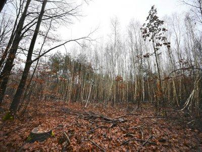 La forêt de Weitbruch, dans le Bas-Rhin, le 13 décembre 2019, vingt ans après la tempête de décembre 1999    FREDERICK FLORIN [AFP]