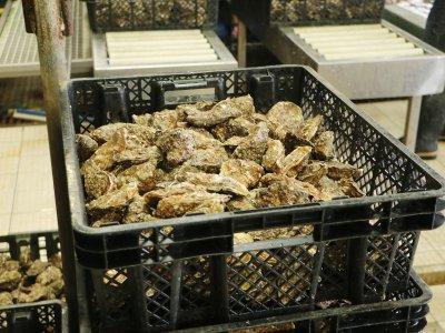 Les huîtres sont contaminées par le novovirus.    Léa Quinio
