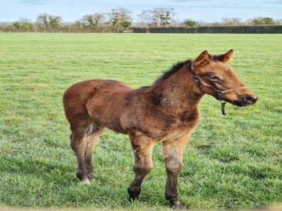 La saison des naissances a débuté dans le Calvados et les premiers poulains ont vu le jour en janvier.
