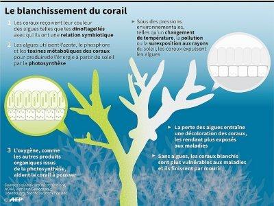 Le blanchissement du corail    Laurence CHU [AFP/Archives]