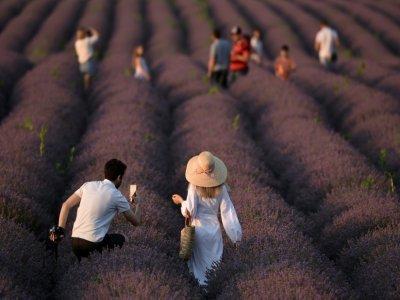 Des touristes dans un champ de lavande, à Valea-Trestieni, en Moldavie, le 10 juillet 2021 - SERGEI GAPON [AFP]