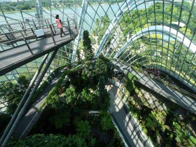 Garden by the Bay à Singapour, dans le Cloud Forest, le 26 juillet 2021    ROSLAN RAHMAN [AFP]