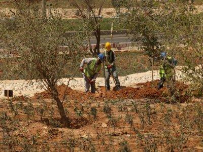 """D'ici 2030, le projet """"Green Riyadh"""" prévoit de planter 7,5 millions d'arbres. Ryad, le 29 mars 2021    Fayez Nureldine [AFP/Archives]"""