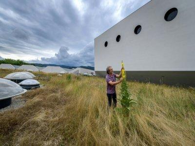 Toiture végétalisée sur le toit d'un complexe de la Halle Saint-Jacques de Bâle en Suisse, le 29 juin 2021    Fabrice COFFRINI [AFP]