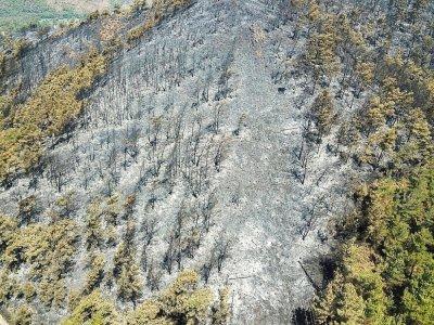 Une vue aérienne prise le 3 août d'une zone ravagée par les incendies dans la région de Marmaris en Turquie    Yasin AKGUL [AFP]