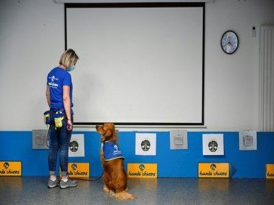 Pokaa, un chien renifleur de Covid-19, avec son éducatrice devant des boîtes contenant des échantillons test, à l'Ehpad La Roselière de Kunheim  dans le Haut-Rhin, le 2 août 2021    SEBASTIEN BOZON [AFP]
