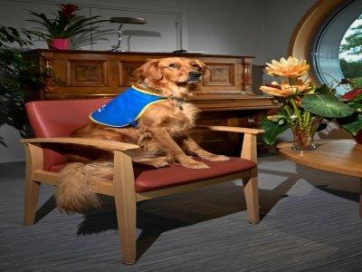 Pokaa, un chien renifleur de Covid-19 à l'Ehpad La Roselière, le 2 août 2021 à Kunheim dans le Haut-Rhin    SEBASTIEN BOZON [AFP]