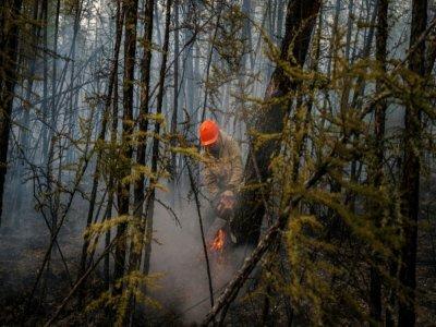 Un membre du Service aérien de protection des forêts coupe un arbre pour protéger la forêt des incendies à la lisière du village de Byas-Kyuel, le 26 juillet 2021 - Dimitar DILKOFF [AFP]