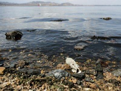 Un poisson mort sur le rivage de la lagune de la mer Mineure, le 25 août 2021 en Espagne    Jose Miguel  FERNANDEZ [AFP/Archives]