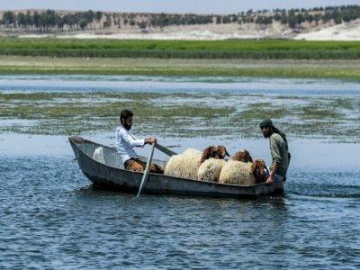 Deux hommes et des moutons en barque en amont du lac Assad, le long du fleuve Euphrate, le 25 juillet 2021 à Roumeila    Delil SOULEIMAN [AFP]