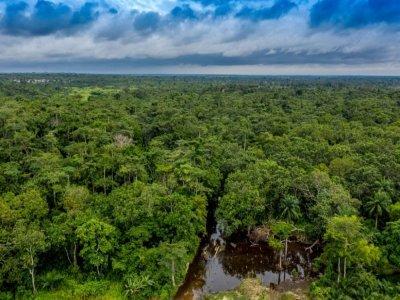 Vue aérienne de la forêt de Hlanzoun, le 9 juilelt 2021 au Bénin    Yanick Folly [AFP]