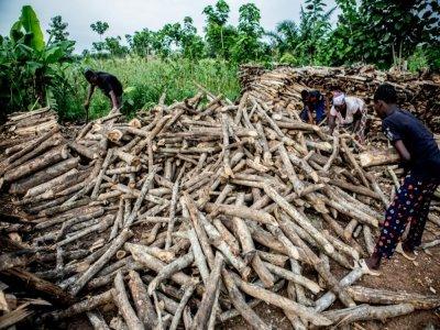Un famille prépare le bois qu'elle va vendre à Zogbodomey, dans la forêt de Hlanzoun, au Bénin, le 9 juillet 2021    Yanick Folly [AFP]