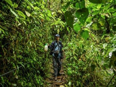 Le photographe colombien Juan Guillermo Jaramillo répand des appâts pour attirer les papillons, le 20 août 2021 à Jardin, en Colombie    JOAQUIN SARMIENTO [AFP]