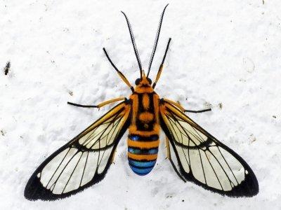 Un papillon de nuit à Jardin, en Colombie, le 19 août 2021    JOAQUIN SARMIENTO [AFP]
