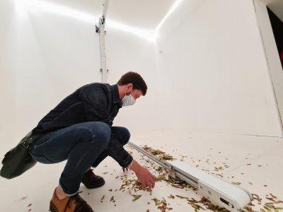 Le visiteur peut lui-même participer à cette installation où des feuilles de sycomore retombent en continu.