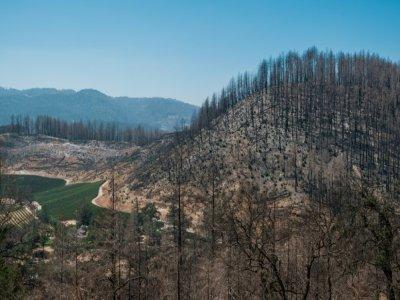"""Une colline de la Napa Valley ravagée par le feu de 2020 baptisé """"Glass fire""""    Nick Otto [AFP]"""