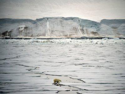 Un ours blanc dans la baie d'Essen, au large de l'île de la Terre George, le 22 août 2021    Ekaterina ANISIMOVA [AFP/Archives]