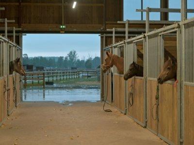 """Des chevaux au refuge de la Fondation """"30 Millions d'amis"""", le 9 septembre 2021 à Bannegon, dans le Cher    GUILLAUME SOUVANT [AFP]"""