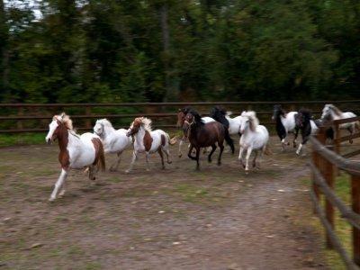 """Des chevaux du refuge """"30 Millions d'Amis"""", le 9 septembre 2021 à Bannegon, dans le Cher    GUILLAUME SOUVANT [AFP]"""