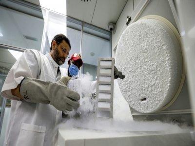 Le docteur Nisar Wani, directeur scientifique du Centre de reproduction biotechnologique, examine des échantillons congelés, le 4 juin 2021 à Dubaï    Karim SAHIB [AFP]