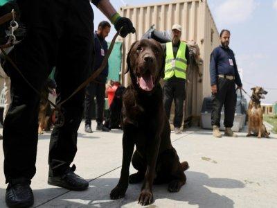 Des chiens, abandonnés dans le chaos des évacuations d'Afghanistan, sont entraînés dans un centre de dressage improvisé à l'aéroport de Kaboul, le 12 septembre 2021    Karim SAHIB [AFP]