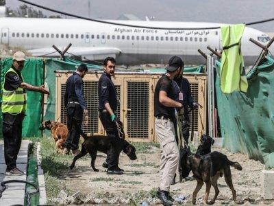 Des chiens, abandonnés lors des évacuations chaotiques après le retour des talibans, sont entraînés à l'aéroport de Kaboul, le 12 septembre 2021    Karim SAHIB [AFP]