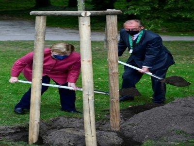 La chancelière Angela Merkel et le maire de Templin, Detlef Tabbert, creusent le sol pour y planter un tilleul, le 10 septembre 2021, à l'occasion du 750ème anniversaire de la ville où a grandi Mme Merkel - John MACDOUGALL [AFP/Archives]
