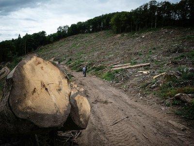 Arbres abattus dans le Morvan, près de Dun-Les-Places, le 3 septembre 2021 - JEAN-PHILIPPE KSIAZEK [AFP/Archives]