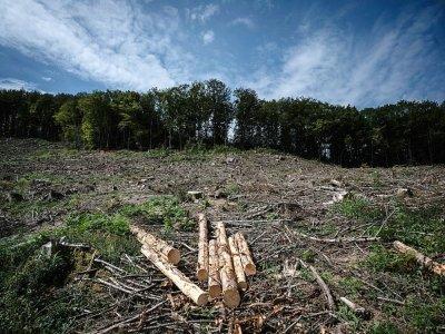 Parcelle du Vieux Dun (Nièvre), où une vingtaine d'hectares d'épicéas viennent d'être coupés, le 3 septembre 2021 - JEAN-PHILIPPE KSIAZEK [AFP/Archives]