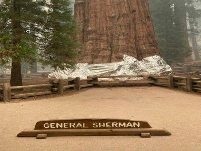 """Les pompiers ont drapé d'une couverture ignifugée la base du plus emblématique des séquoias géants, baptisé """"General Sherman"""", considéré comme l'arbre le plus volumineux du monde - Handout [NATIONAL PARK SERVICE/AFP]"""